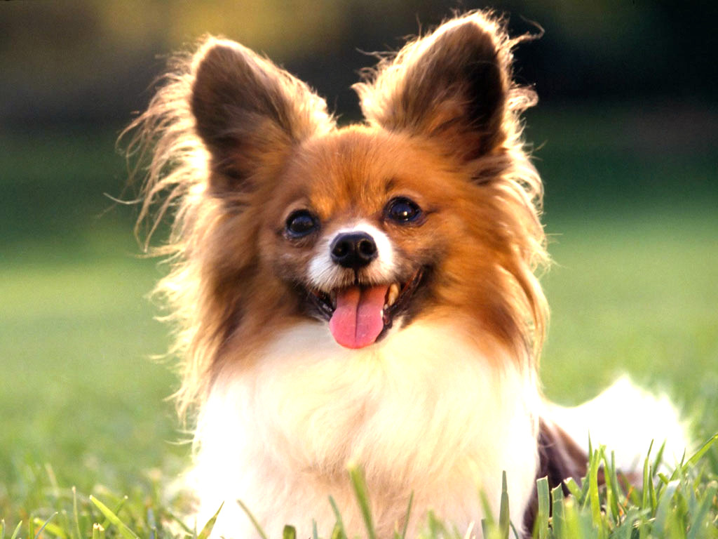Small Breeds Of Dogs That Are Cute